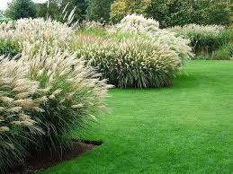 best 25 landscape grasses ideas on landscape