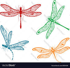 pretty dainty dragonfly designs royalty free vector image