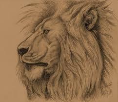 lion sketch by albertoaprea on deviantart