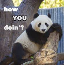 Panda Mascara Meme - funny panda best image of panda 2018