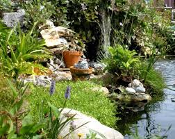 native aquatic plants spotlight give the gift of tranquility lux magazine