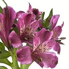 purple lilies wholesale alstroemerias purple peruvian lilies in