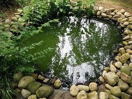 fish pond size and shape petcha
