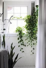 Best Plants For Bathrooms Vines Shower Square White Tile Window In Shower Snake Plant Or