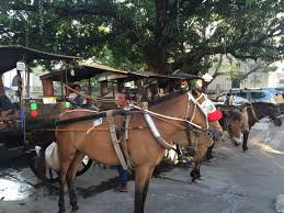 philippine kalesa vigan city stays walkable despite influx of tourists
