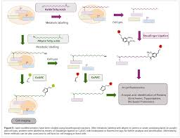 the protein lipidation and its analysis open access journals