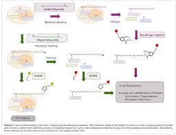 the protein lipidation and its analysis omics international