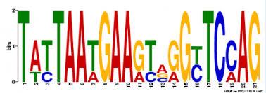 Meme Motif Search - motifs gene brca1