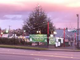 scout troop 100 annual christmas tree sale now on at st alphonsus