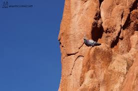 Rock Climbing Garden Of The Gods 15 Pictures From Garden Of The Gods That Will Make You Fall In