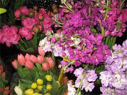 bulk flowers the flower market at bayshore bulk flowers ta fl