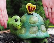 steam of intuition endangered species live ornamental turtles