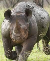 sle resume journalist position in kzn wildlife ezemvelo accommodation nine rhinos found massacred at hluhluwe imfolozi park news24