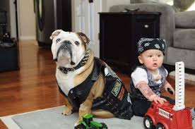 Halloween Costumes English Bulldogs 23 Dog Kid Halloween Costumes Squeal Huffpost