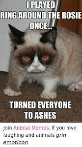 Best Animal Memes - 43 best animal memes images on pinterest funny animals funny