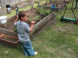 backyard farming your backyard farm