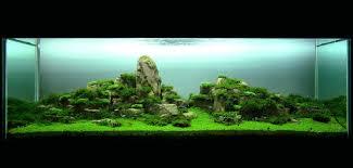 japanese aquascape let u0027s talk aquascaping