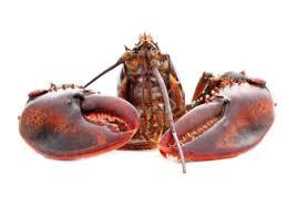 cuisiner un homard vivant madame aux fourneaux cappuccino de bisque de homard