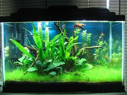 Best Substrate For Aquascaping My First Planted Tank 10 Gallon Low Tech
