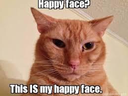 Monday Cat Meme - monday memes rumpydog