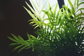 Indoor Plant Light by Indoor Plants Light Requirementsterracast Products