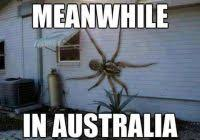 23 Funny Spider Memes Weneedfun - new memes about spiders 23 funny spider memes weneedfun 80