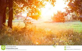 sunset forest glade royalty free stock photo image 34567925