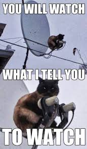 Evil Cat Meme - looks like animal planet meme slapcaption com animals