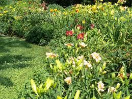 flower gardens u2013 flower borders u2013 do you need to fertilize