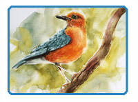 watercolor sketch how to paint a bird