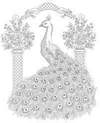 peacock jungle scene for kid sketch coloring pages kids