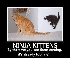 Meme Ninja - ninja meme by datchick03 memedroid