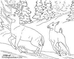 plants coloring pages rain forest animals with regard to 150
