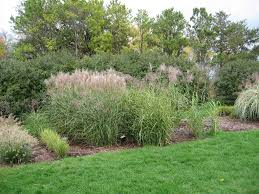 ornamental grass collection 2011 open house grasstalk