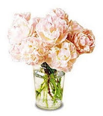 peonies delivery peonies a flower in high demand at citifloral citifloral inc