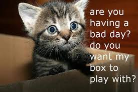Bad Day Meme - are you having a bad day kitten memes and comics