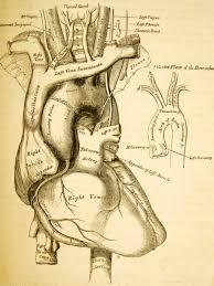 11 best vintage medical illustrations images on pinterest