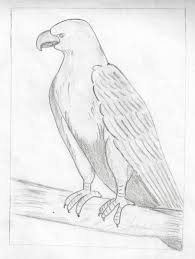 bird sketches pencil best drawing birds sketch images drawing