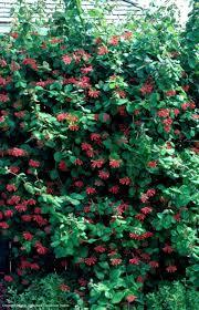 native houston plants texas native plants database