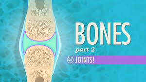 Anatomy And Physiology Skeletal System Test Joints Crash Course A U0026p 20 Youtube