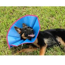 Comfortable Dog Recovery Ecollar For Dogs