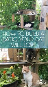 157 best cat outdoor oasis images on pinterest backyard ideas