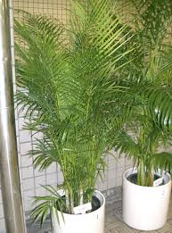 non toxic indoor house plants for dogs how to get sweat stains out