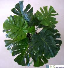 Decorative Plants For Home Artificial Plants Picture More Detailed Picture About Free