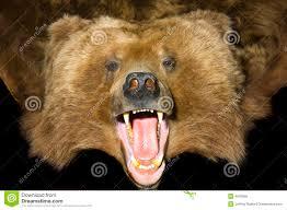 bear pelt rug roselawnlutheran