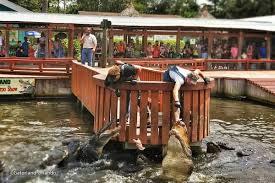 Alligators In Georgia Map Gatorland Orlando Alligator Theme Park In Orlando