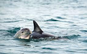 celebrate world wildlife day with these baby animals travel