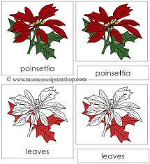 montessori tree printable poinsettia nomenclature cards in red montessori print shop