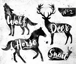 tableau portrait noir et blanc cheval blanc banque d u0027images vecteurs et illustrations libres de