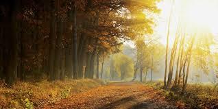 le bureau lumi鑽e du jour lumière du jour les bienfaits de la lumière naturelle